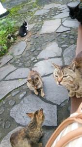 ごはんに群がる猫たち