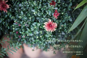 20141022-82_Ja