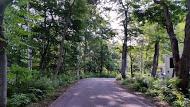 0729森の中のような道[1]